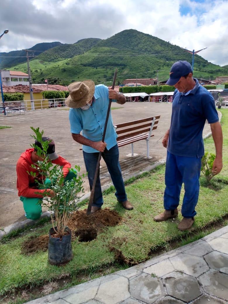 prefeitura-municipal-de-poco-dantas-inicia-projeto-de-rearborizacao-do-municipio2.png
