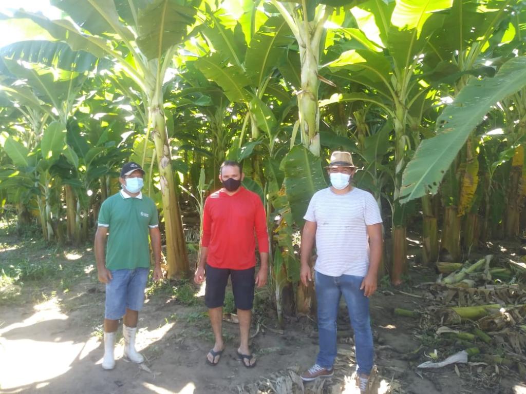 Prefeitura de Poço Dantas investe em pequenos produtores rurais e adquire mais de 350 mudas de bananeiras